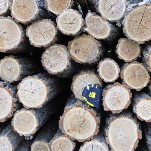 Tűzifa vásárlás