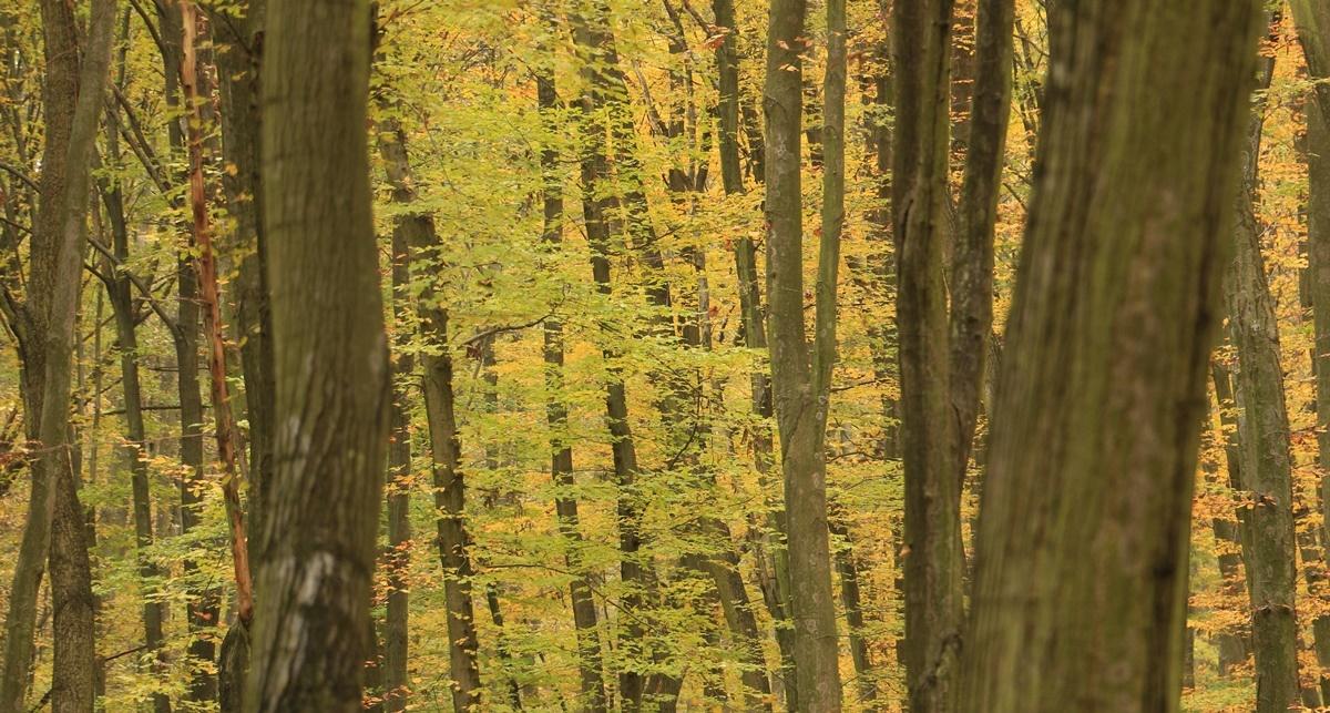 bát_ősz