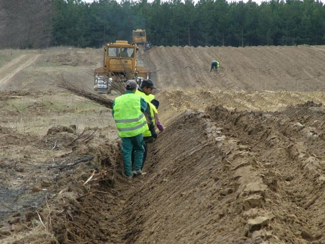 40 hektár erdőt telepít a Gemenc Zrt.