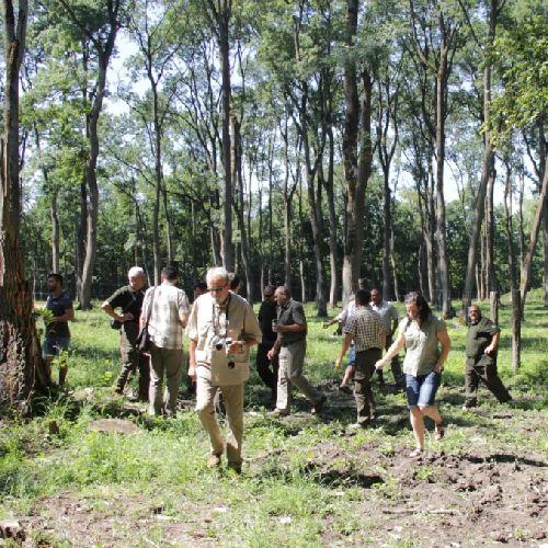 Ártéri erdők ölelésében