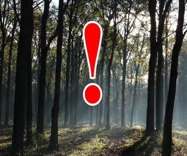 Erdőlátogatási korlátozások novemberben és decemberben