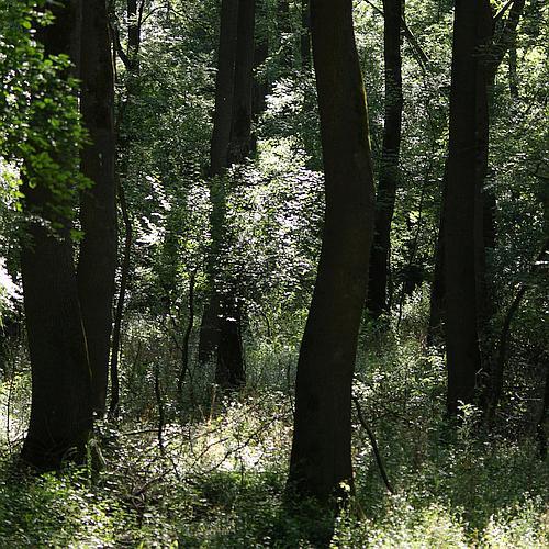 Erdők és erdészek